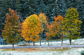 First winter snow and autumn colorful foliage near country road — Foto Stock