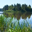 Summer rushy lake — Stock Photo #7580838