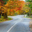 Autumn road in forest — Stock Photo #7581033