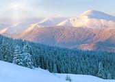 Snowy sunrise landscape — Stock Photo