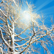Sunshine in winter tree twigs — Stock Photo