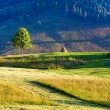 Summer mountain grassland landscape — Stock Photo #7630561