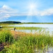 Summer rushy lake — Stock Photo #7715483