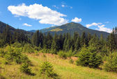 Summer mountain view — Stockfoto