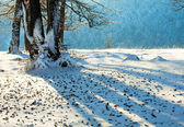 First winter snow and last autumn leaves in forest — Stock Photo