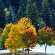 first winter snow and autumn colorful trees near mountain road — Stock Photo