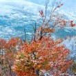 First winter snow and autumn colorful foliage on mountain — Stock Photo