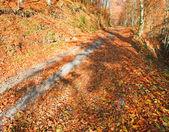Autumn mountain dirty road — Stock Photo