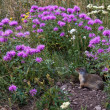 Ground squirrel with landscaped home - Stock Photo