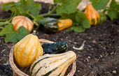 Fresh decorative gourds — Stock Photo