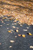 Leaves on the road — Stock Photo