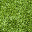 Royalty-Free Stock Photo: Grass texture