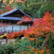 Stock Photo: Colorful leaf and tree in jap: Koyo