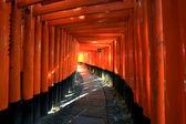 Torii in colorful leaf and tree in japan : Fujimi Inari Kyoto — Stock Photo