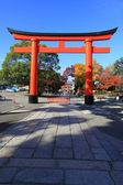Torii in colorful leaf and tree in japan : Fujimi Inari Kouyou — Stock Photo