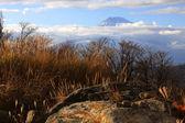 Beautiful fuji mountain in autumn — Stockfoto