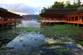 Torii and old shine temple in colorful leaf and tree in Miyajima Islands : — Stock Photo