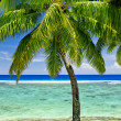 Single palm tree overlooking blue lagoon - Stock Photo