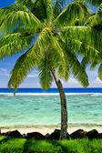 Single palm tree overlooking blue lagoon — Stock Photo