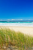 Grass and sandy beach on the Gold Coast Queensland — Stock Photo
