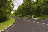 Road in a green forest — Stock Photo