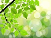 Sun Rays On Autumn Tree Branch — Stock Vector