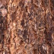 Royalty-Free Stock Photo: Nature Tree Bark Texture
