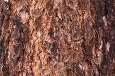 Nature Tree Bark Texture — Stock Photo