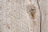 Texturu dřeva stromu — Stock fotografie