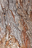 老树树皮设计 — 图库照片