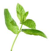 Fresh greem mint isolated on white — Stock Photo
