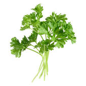 A few sprigs of parsley, isolated — Stock Photo