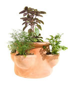 Small garden tricks - herb planter isolated on white — Stock Photo