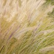 Dry grass — Stock Photo #7246188