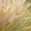 Dry grass — Stock Photo #7246188