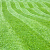 Hilly lawn — Stock Photo