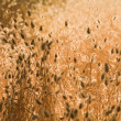 Natural background of beautiful golden dry grass. partly in the — Stock Photo