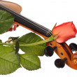 Royalty-Free Stock Photo: A part of violin and a coral rose