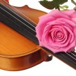 Royalty-Free Stock Photo: Lovely pink rose on a violin