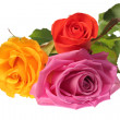 Royalty-Free Stock Photo: Three colorful roses