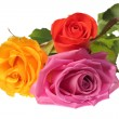 Stock Photo: Three colorful roses