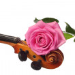 Rose on a violin — Stock Photo