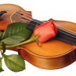 A part of violin with coral rose — Stock Photo
