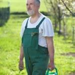 Portrait of a senior man gardening in his garden — Stock Photo