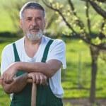Portrait d'un homme senior jardinage dans son jardin — Photo