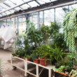 Stock Photo: Greenhouse series - inside greenhouse