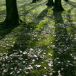 Low early spring setting sun in a forest casting long shadows — Stock Photo