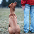 Master and her obedient (rhodesian ridgeback) dog — Stok Fotoğraf #7416206