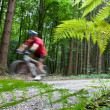 Mountain biking in a forest - biker on a forest biking trail goi - Stock Photo