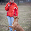 Master and her obedient (rhodesian ridgeback) dog — Stock Photo #7416619
